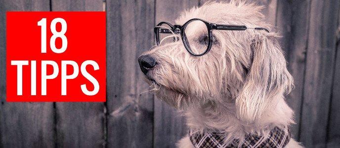 Hund mit Brille, 18 Tipps