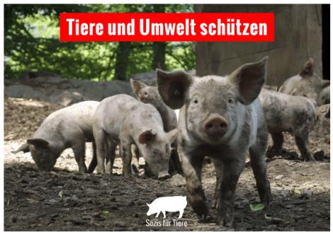 Postkarte: Tiere und Umwelt schützen