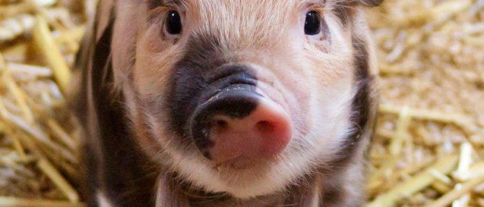 Gegen Tierfabriken - Für eine solidarische Lebensweise!